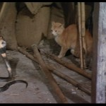 Snake vs cats claw