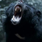 Even the bears are after them