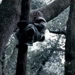 Jackie scales a tree just like Who Am I