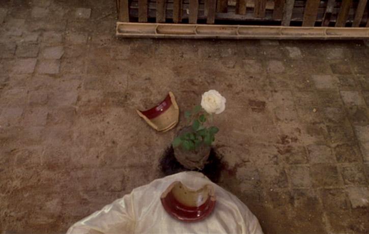 The plant pot lands a riot